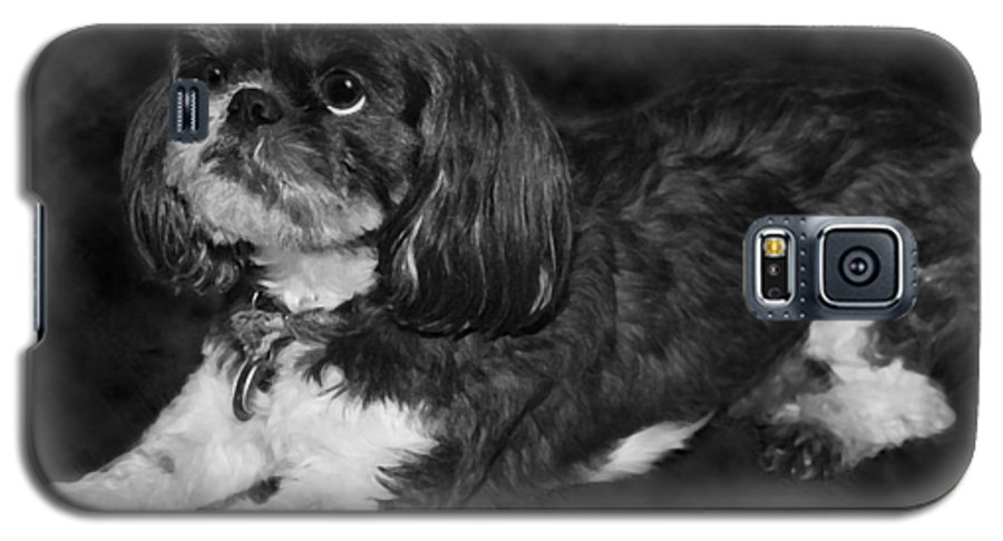 3scape Galaxy S5 Case featuring the painting Shih Tzu by Adam Romanowicz