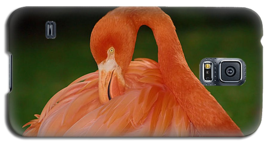 Flamingo Galaxy S5 Case featuring the photograph shy by Gaby Swanson
