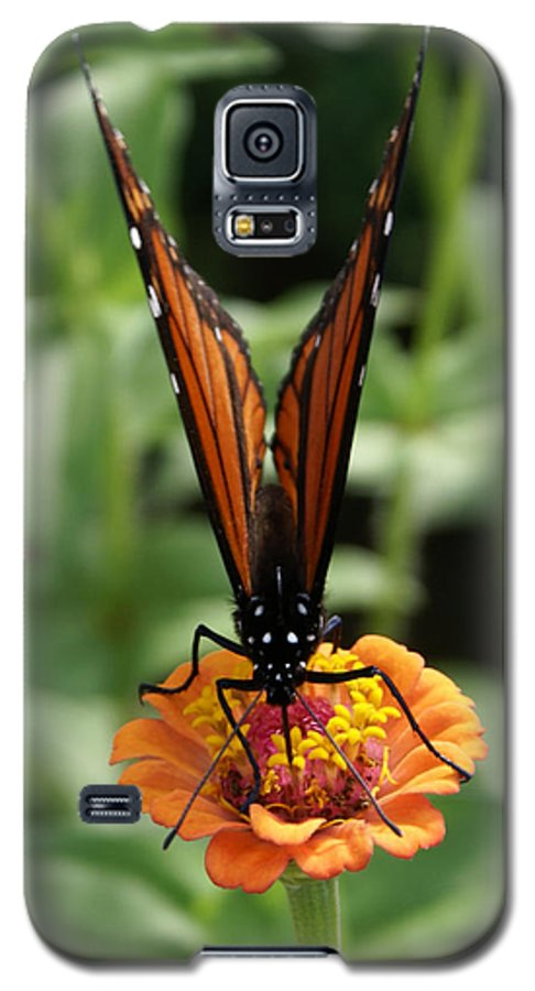 Butterflies Galaxy S5 Case featuring the painting Sip Sip Away by Debbie May