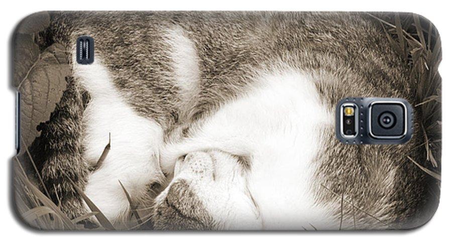Pets Galaxy S5 Case featuring the photograph Sleeping by Daniel Csoka