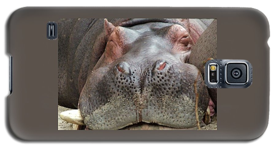 Hippopotamus Galaxy S5 Case featuring the photograph Sleeping Hippo by Tiffany Vest