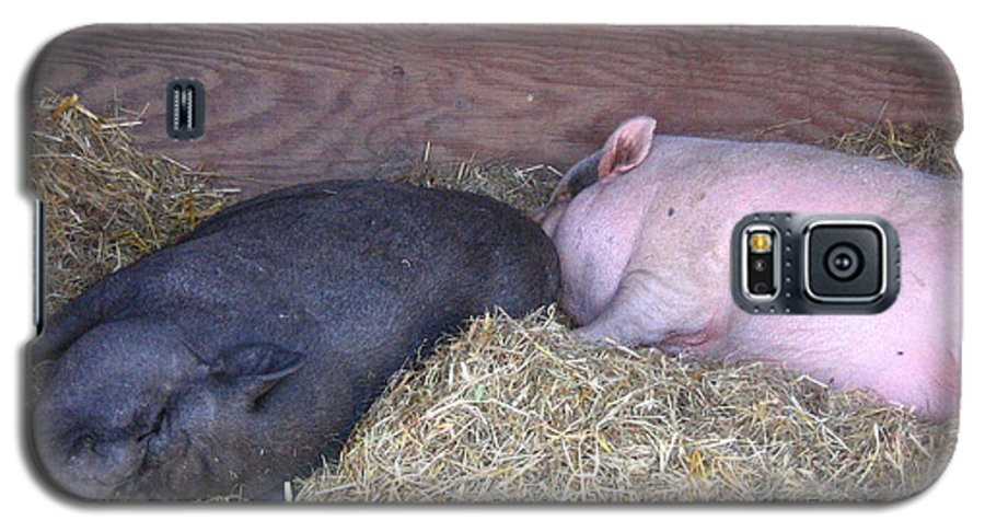 Pig Galaxy S5 Case featuring the photograph Sleeping Pigs In The Hay by Melissa Parks