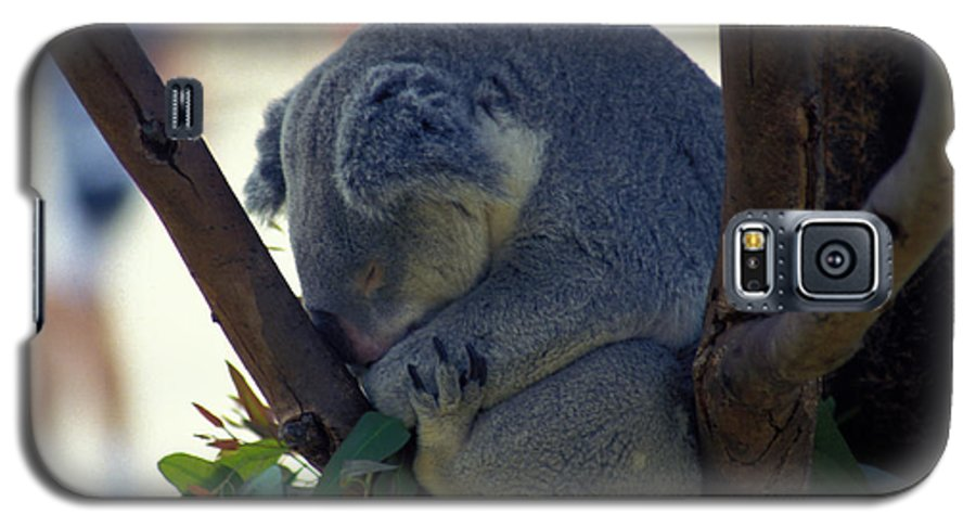 Sleep Galaxy S5 Case featuring the photograph Sleepy Koala Bear by Carl Purcell