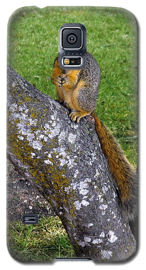 Nature Galaxy S5 Case featuring the photograph Snack Time by Lucyna A M Green