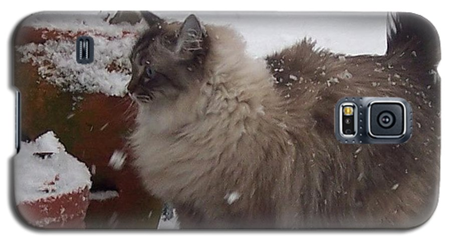 Cats Galaxy S5 Case featuring the photograph Snow Kitty by Debbi Granruth