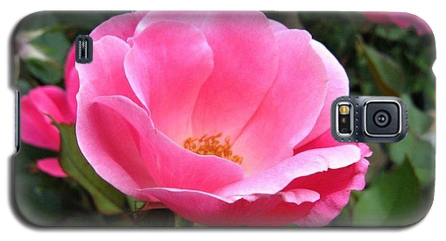 Flower Galaxy S5 Case featuring the photograph So Pretty by Rhonda Barrett