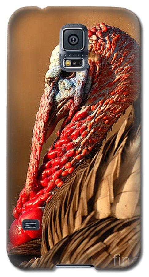 Turkey Galaxy S5 Case featuring the photograph Spring Portrait Of Wild Turkey Tom by Max Allen