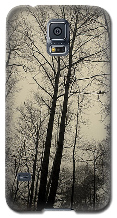 Trees Galaxy S5 Case featuring the photograph Standing Tall by Ayesha Lakes
