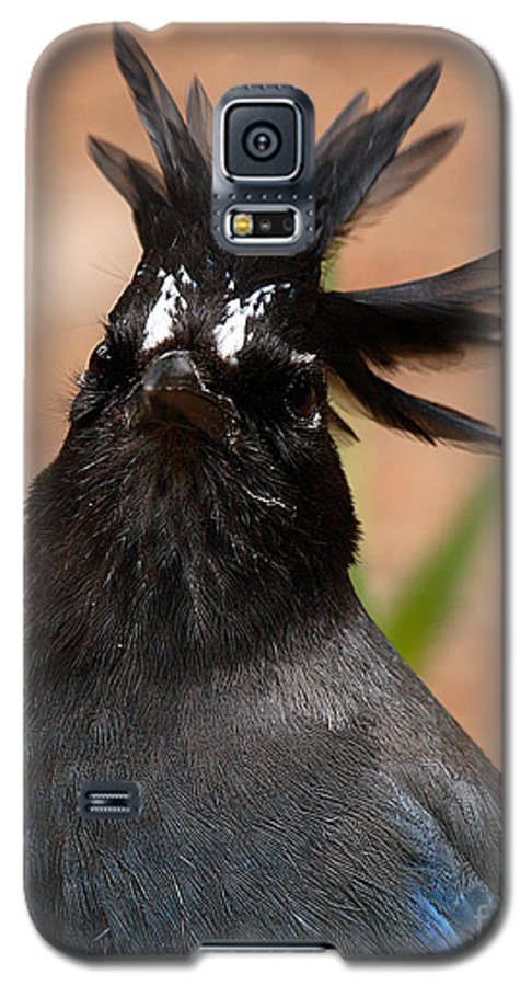 Jay Galaxy S5 Case featuring the photograph Stellar's Jay With Rock Star Hair by Max Allen