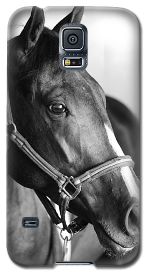 Horse Galaxy S5 Case featuring the photograph Horse And Stillness by Marilyn Hunt