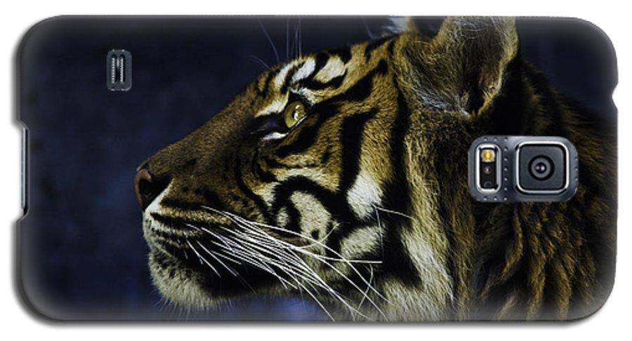 Sumatran Tiger Galaxy S5 Case featuring the photograph Sumatran Tiger Profile by Sheila Smart Fine Art Photography