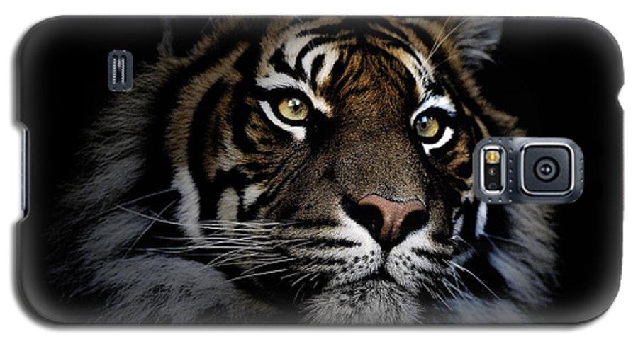 Sumatran Tiger Wildlife Endangered Galaxy S5 Case featuring the photograph Sumatran Tiger by Sheila Smart Fine Art Photography