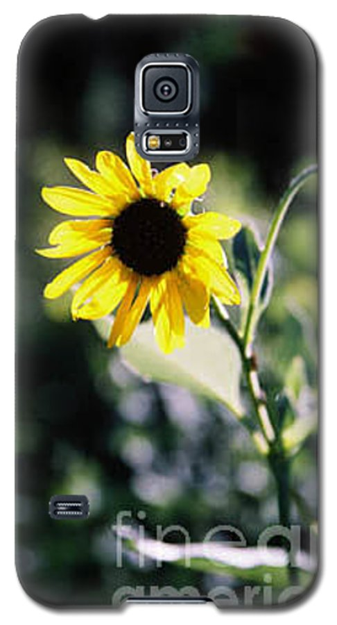 Sunflower Galaxy S5 Case featuring the photograph Summer Sunshine by Kathy McClure