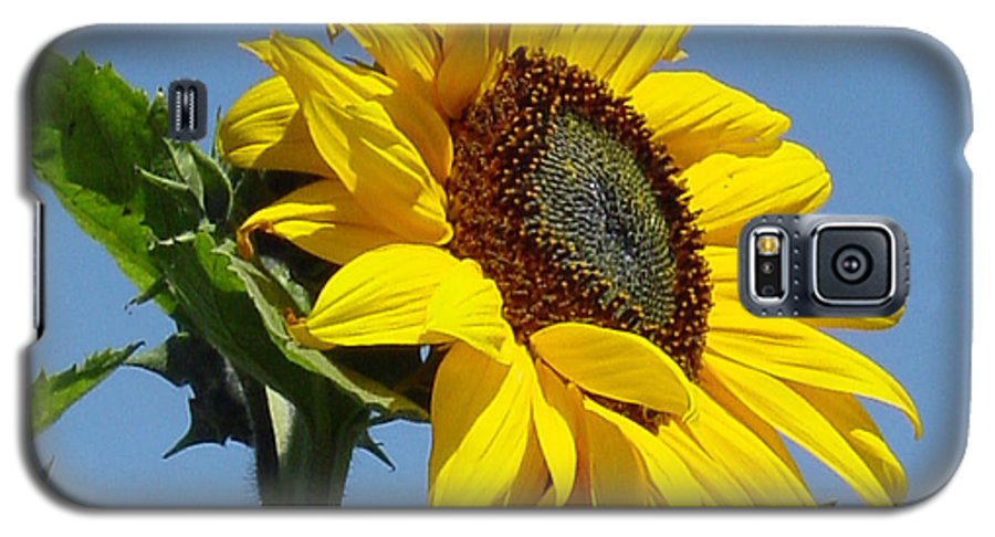 Sunflower Galaxy S5 Case featuring the photograph Sun Goddess by Suzanne Gaff