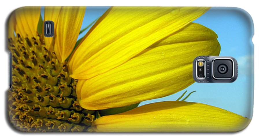 Sunflowers Galaxy S5 Case featuring the photograph Sunflower by Amanda Barcon