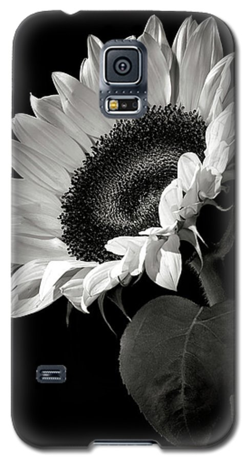 Flower Galaxy S5 Case featuring the photograph Sunflower In Black And White by Endre Balogh