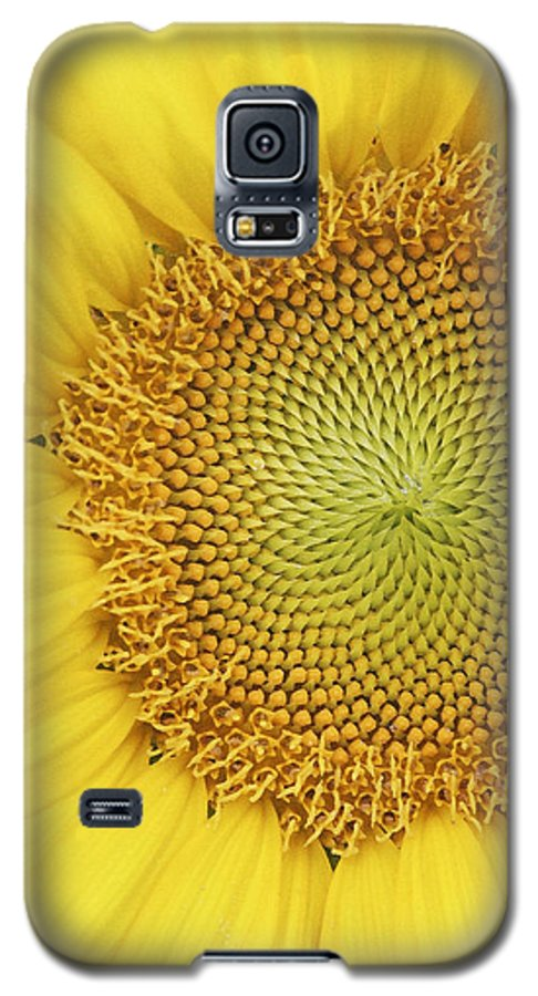 Sunflower Galaxy S5 Case featuring the photograph Sunflower by Margie Wildblood