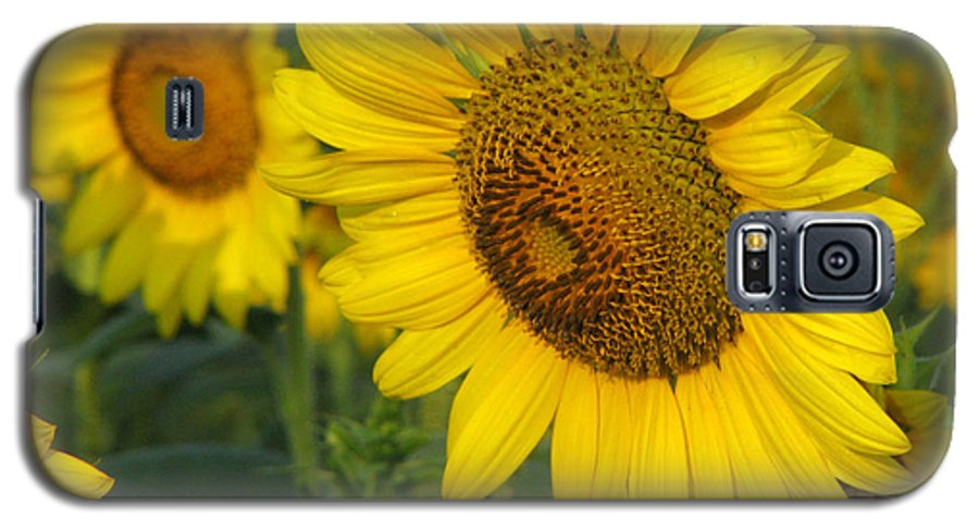 Sunflowers Galaxy S5 Case featuring the photograph Sunflower Series by Amanda Barcon