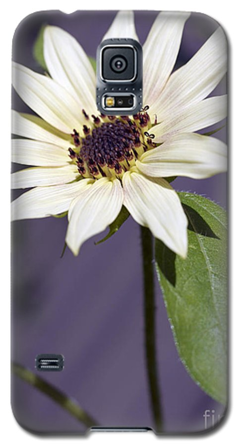 Helianthus Annus Galaxy S5 Case featuring the photograph Sunflower by Tony Cordoza
