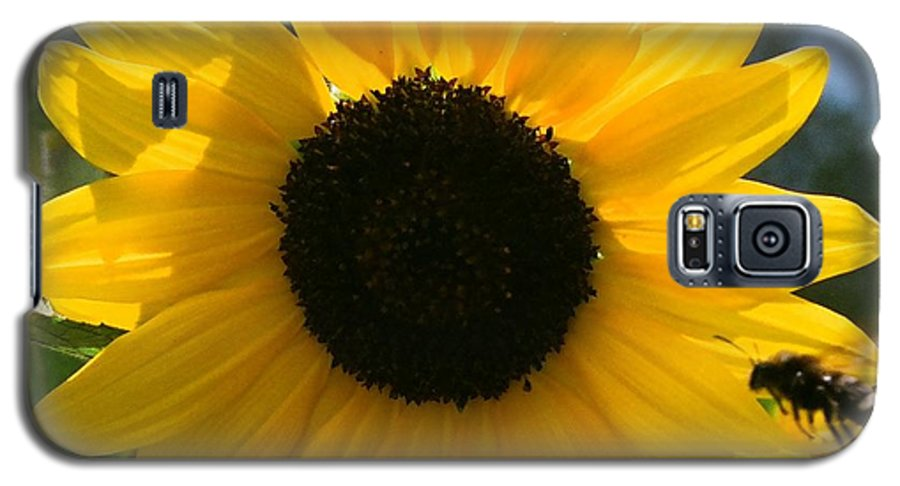 Flower Galaxy S5 Case featuring the photograph Sunflower With Bee by Dean Triolo