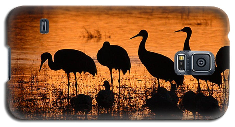 Crane Galaxy S5 Case featuring the photograph Sunset Reflections Of Cranes And Geese by Max Allen