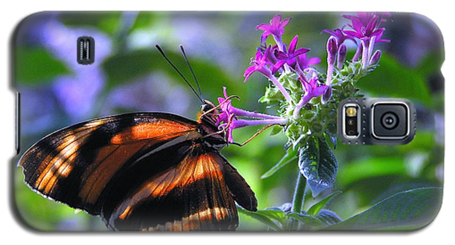 Butterfly Galaxy S5 Case featuring the photograph Sweet Nector by Louise Magno
