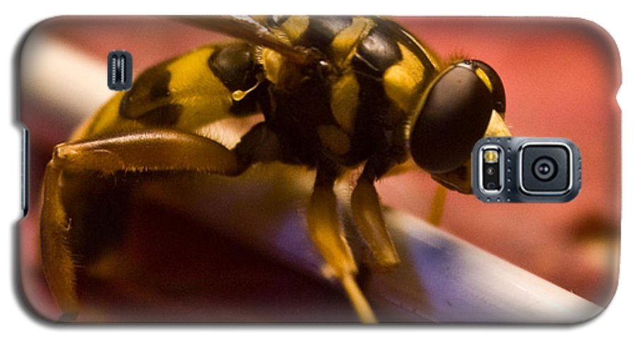 Insect Galaxy S5 Case featuring the photograph Syrphid Fly Poised by Douglas Barnett