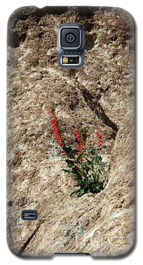 Wildflowers; Flowers Galaxy S5 Case featuring the photograph Tenacity by Kathy McClure