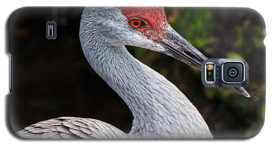 Bird Galaxy S5 Case featuring the photograph The Greater Sandhill Crane by Christopher Holmes
