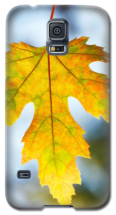 Maple Galaxy S5 Case featuring the photograph The Maple Leaf by Marilyn Hunt