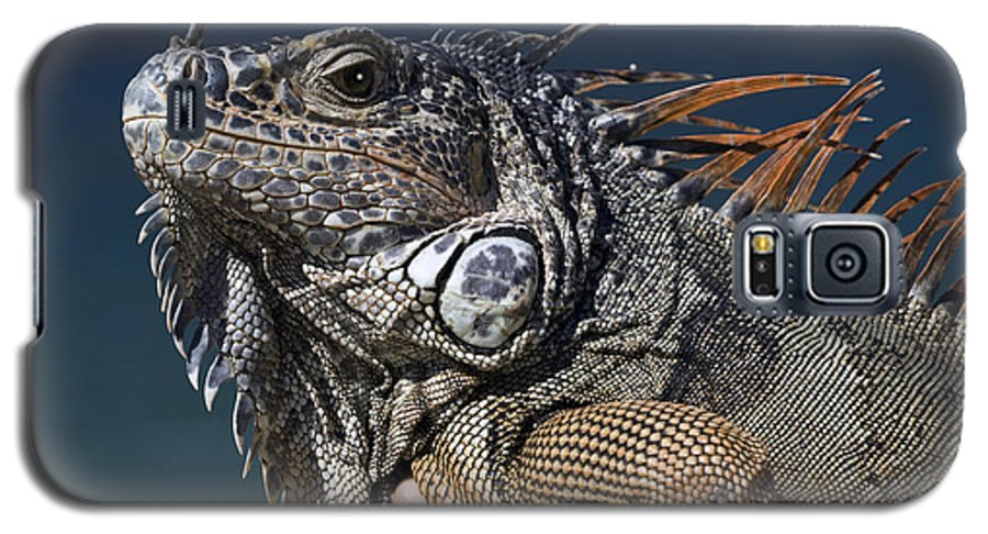 Animal Galaxy S5 Case featuring the photograph The Night Of The Iguana by Carl Purcell