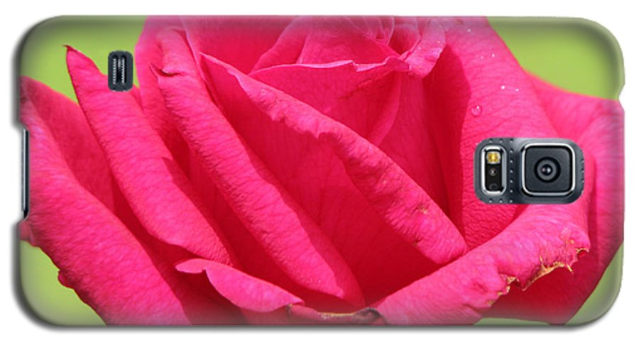 Roses Galaxy S5 Case featuring the photograph The Rose by Amanda Barcon