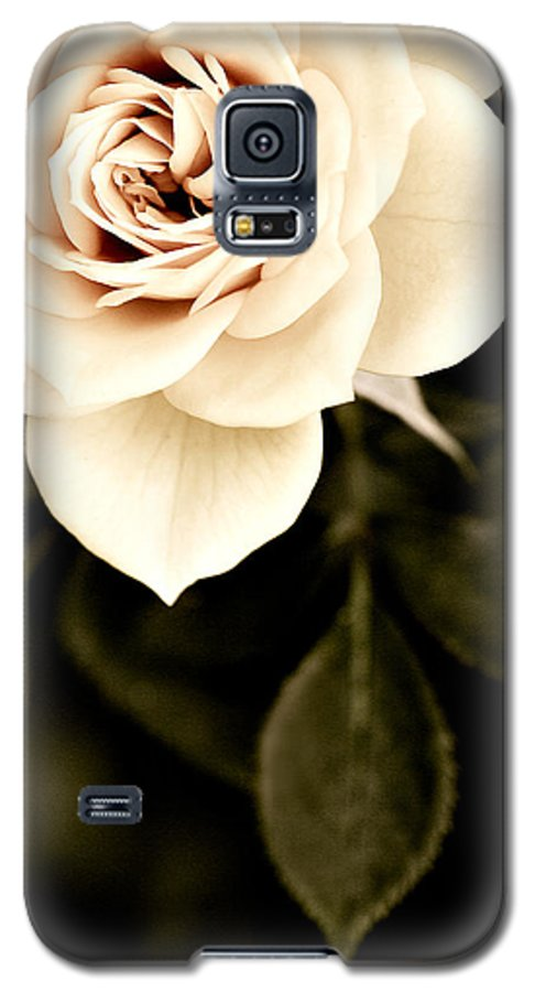 Rose Galaxy S5 Case featuring the photograph The Softest Rose by Marilyn Hunt