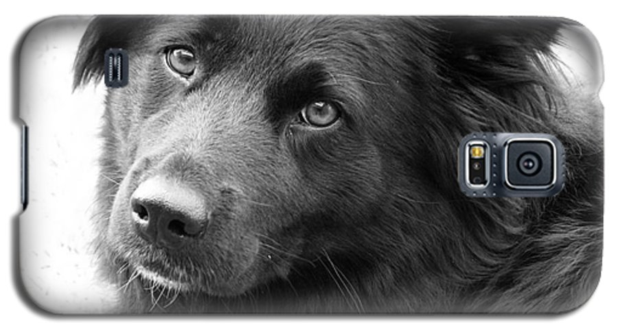 Dog Galaxy S5 Case featuring the photograph Thinking by Amanda Barcon