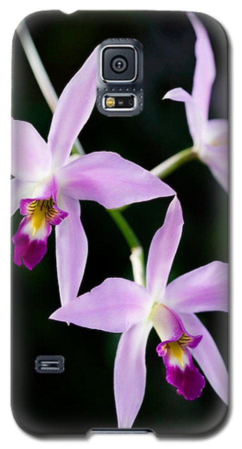 Orchid Galaxy S5 Case featuring the photograph Three Orchids by Marilyn Hunt