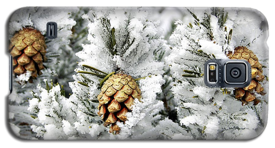 Frosty Galaxy S5 Case featuring the photograph Three Pinecones by Marilyn Hunt