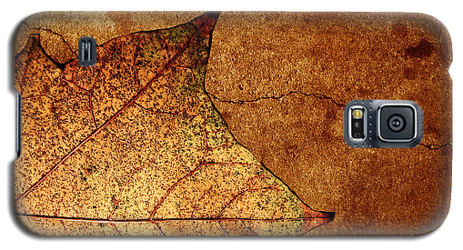 Autumn Galaxy S5 Case featuring the photograph Today Everything Changes by Dana DiPasquale