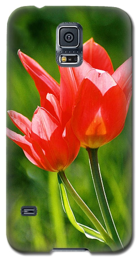 Flowers Galaxy S5 Case featuring the photograph Toronto Tulip by Steve Karol