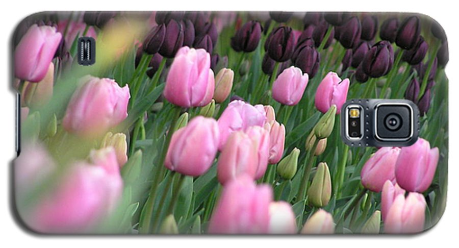 Tulips Galaxy S5 Case featuring the photograph Tulip Dreams by Louise Magno