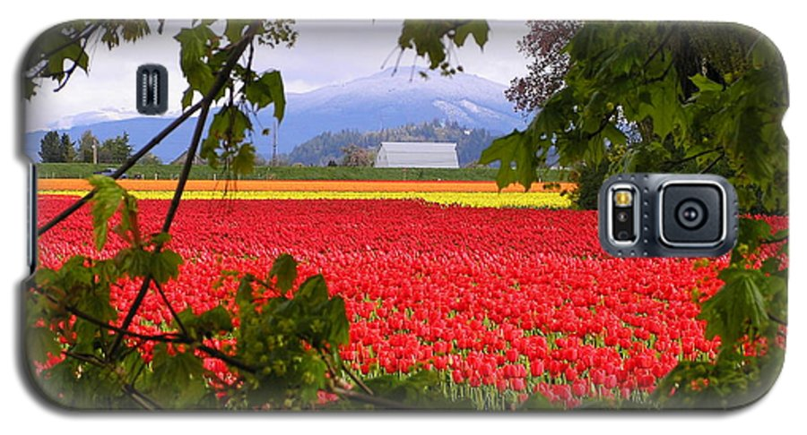 Tulip Galaxy S5 Case featuring the photograph Tulips Secret Window by Louise Magno