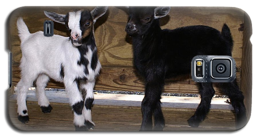 Baby Goat Twins Galaxy S5 Case featuring the photograph Twin Kids by Debbie May