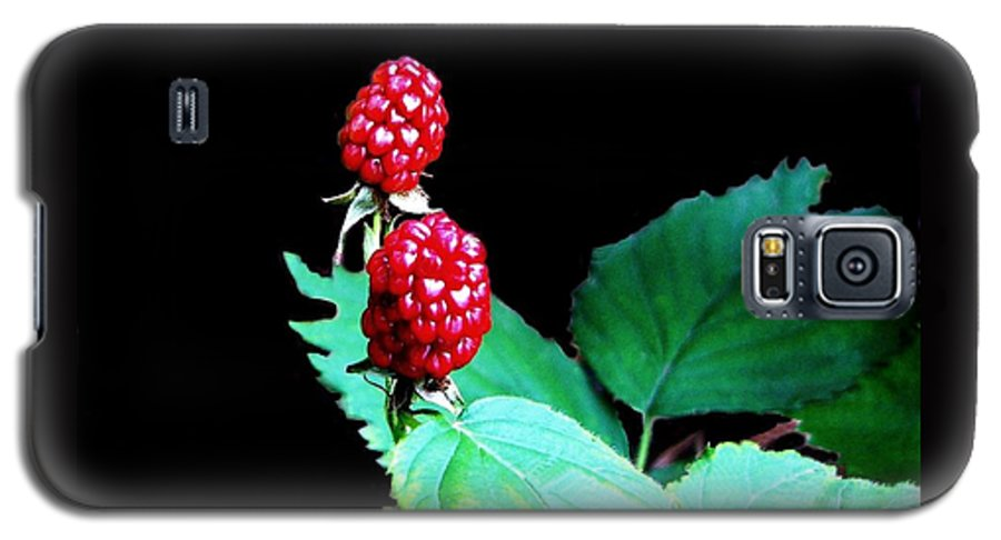 Black Berries Galaxy S5 Case featuring the digital art Unripe Blackberries by Kenna Westerman