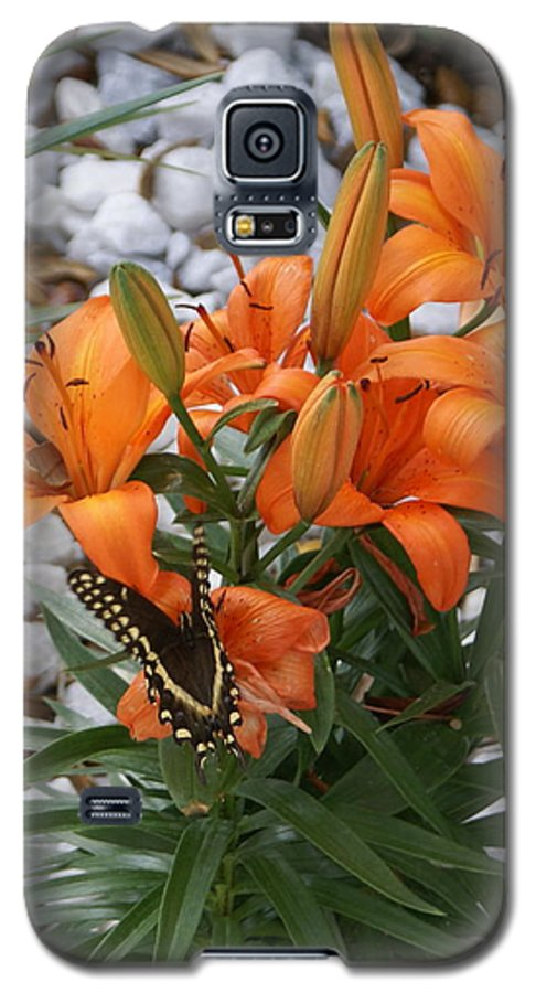 Flower Galaxy S5 Case featuring the photograph Untitled by Debbie May