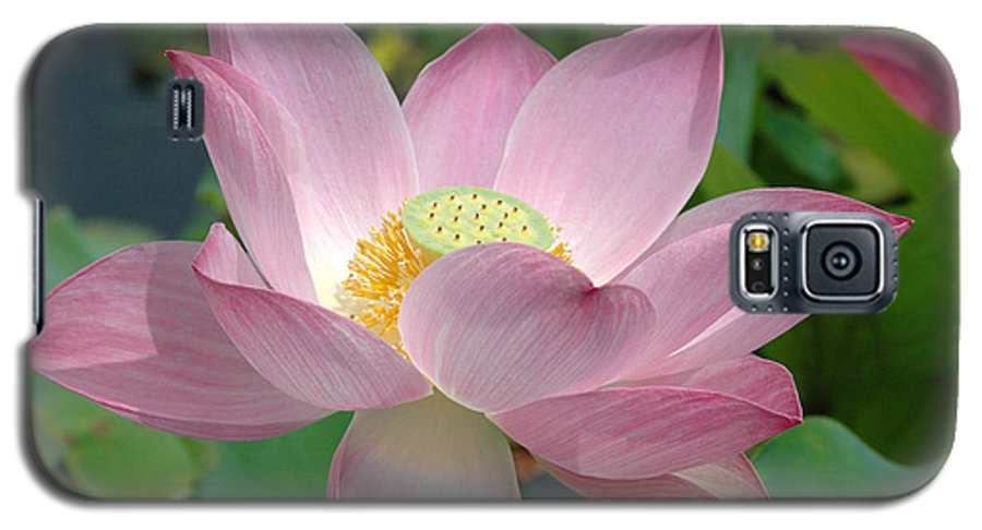 Flower Galaxy S5 Case featuring the photograph Untitled by Kathy Schumann