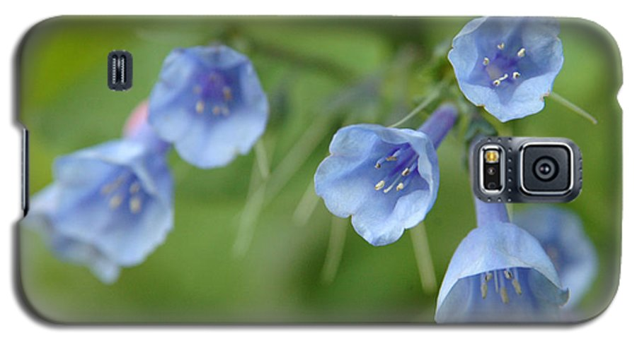 Bluebells Galaxy S5 Case featuring the photograph Virginia Bluebells I by Kathy Schumann