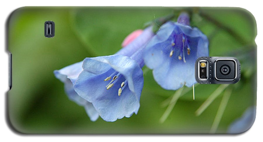 Bluebells Galaxy S5 Case featuring the photograph Virginia Bluebells II by Kathy Schumann