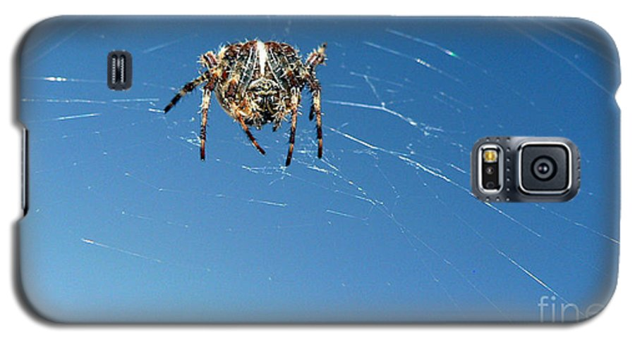 Spider Galaxy S5 Case featuring the photograph Waiting by Larry Keahey