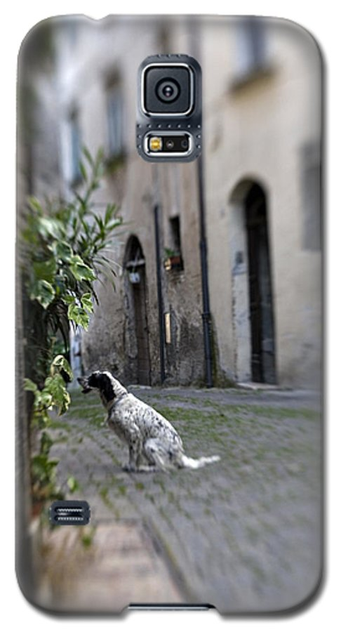 Dog Galaxy S5 Case featuring the photograph Waiting by Marilyn Hunt