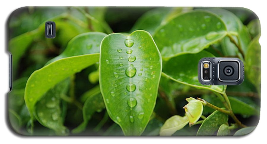 Macro Galaxy S5 Case featuring the photograph Wet Bushes by Rob Hans