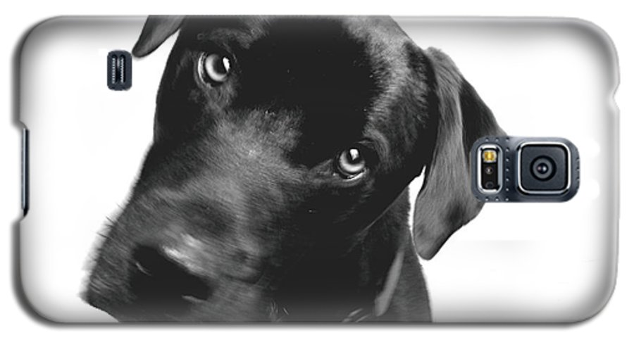 Labrador Galaxy S5 Case featuring the photograph What by Amanda Barcon